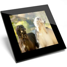 1 X Afghan Hounds Canine Dog Pets Glass Coaster - Kitchen Student Gift #16056