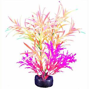 "Marina iGlo Plant Pink Alternanthera 5.5"" - Aquarium Plant"