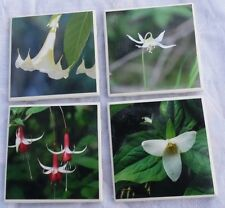 "4 flower photo coaster/tile cork backed Trillium Lily Trumpet Fuchsia square 4"""