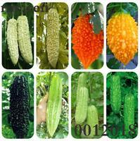 10PCS MOMORDICA CHARANTIA SEEDS BITTER MELON GOURD SQUASH ORGANIC FRUIT STRICT