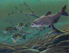 Catfish Print 11 x 14 by Doug Walpus Freshwater Fishing Wildlife Art Gamefish