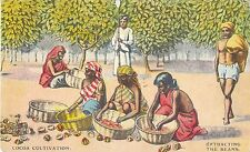 POSTCARD  ADVERTISING  COCOA  Cultivation
