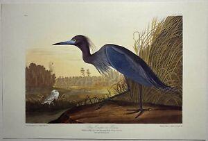John James Audubon Blue Crane or Heron Birds of America Print READY TO FRAME 62