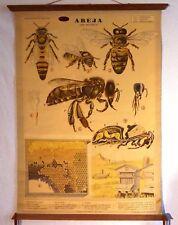 VINTAGE ROLL SCHOOL ANIMALS - THE BEE - ANTIQUE POSTER 100x74Cm Cartel Abeja
