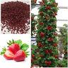 Neu Wohltuend 150Pcs Riesen Strawberry Seeds Ausgezeichnet mit hohem