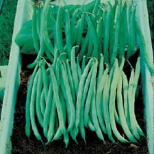 1/4 lb Tenderette bush green bean new seed for 2017 Non- GMO Heirloom