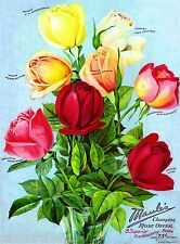 Maule's Rose Roses Vintage Flowers Seed Packet Catalogue Advertisement Poster