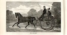 Stampa antica CALESSE DOG-CART CARROZZA a due RUOTE 1892 Old print horses