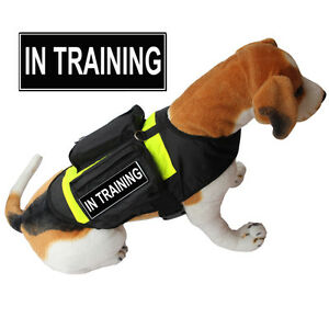 TRAINING SERVICE DOG Vest Harness with POCKETS & Side Bags + Removable Patches