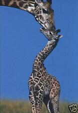 Carte postale: Girafe avec bébé-Girafe et girafon-Girafe and Baby