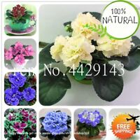 African Violet Flower Seeds Plants Garden Bonsai Perennial Herb Rare 100pcs