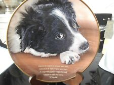 DANBURY MINT PLATE POETRY OF THE BORDER COLLIE DOG SOMEONE TO COMFORT COLLECTOR
