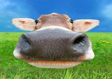 Nosy COW -  3D Lenticular Postcard Greeting Card  - Animal