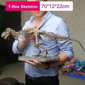 Large T Rex Tyrannosaurus Dinosaur 4d Assembled Skeleton Fossil Model Decor Toys