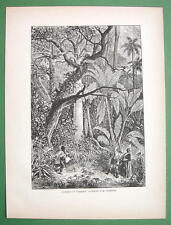 PANAMA Jungle Hunting Parrots - 1858 Antique Print Engraving