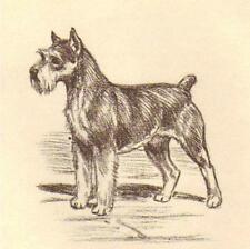 Miniature Schnauzer - Vintage Dog Print - 1954 Megargee