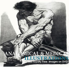 Anatomy and medical  Illustrations Reference German English Art Prints on DVD