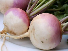 """Turnip Seeds """"Purple Top"""" (Approx 300 Seeds),Excellent Home Vegetable"""
