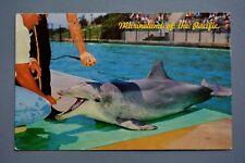 R&L Postcard: Flipper the Talking Dolphin Marineland 1960s