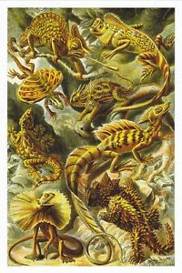 1 NX10 Lacertilla ( Lizards ) NX10 EXOTIC MAGNIFICENT NATURAL  HibiscusExpress