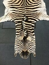 Genuine Authentic Burchell's Zebra hide Taxidermy Rug