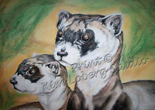 Black Footed FERRET ACEO PRINT Kim Loberg WILDLIFE mini Art ebsq Animal nature