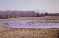 Vintage Photo Slide 1988 Wheeden Rd Elbridge New York Spring