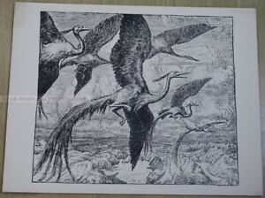 HANS THOMA - birds of passage * MEGA RARE ART PRINT LITHOGRAPH from 1896