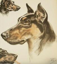 1944 Doberman Pinscher Color Dog Print by Diana Thorne Popular Dog Breeds
