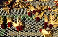 ROTER ERDBEERMAIS 10 Samen für Popcorn oder auf den Grill  Mais rot
