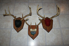 3 Sets Whitetail Deer Antlers