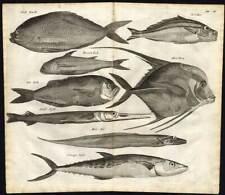 Antique Print-FISH-INDONESIA-EEL-SNAPPER-Nieuhof-1682