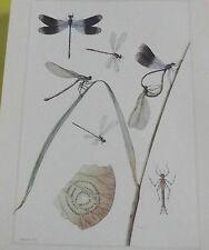 Objet Scolaire planche insecte N°5 LIBELLULE ÉCLATANTE,DEMOISELLE,AGRION