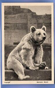 SUPER 1929c BROWN BEAR LONDON ZOO REGENTS PARK VINTAGE POSTCARD