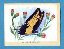 NATURAMA - Lampo 1968 - Figurina-Sticker n. 81 - PAPILIO ANDROGEUS -Rec