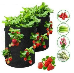 Strawberry Fabric Pot Felt Planter Bag Garden Flower Herb Vegetable Fruit 10G