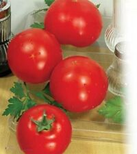 Tomato Seeds *Lyna* vegetable from Ukraine