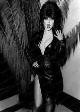 8x10 Print Elvira Cassandra Peterson 1985 #EL88