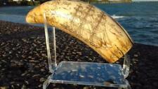 Ship MERCATOR Sperm whale tooth Dent de cachalot bateaux Mercator réplique