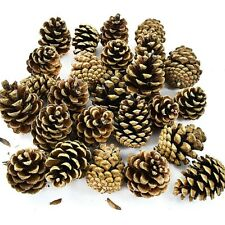 10kg BAG (500) DRIED AUSTRIACA PINE TREE CONES - CHRISTMAS FESTIVE DECORATION