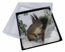 4x Forest Snow Squirrel Picture Table Coasters Set in Gift Box, AS-4C
