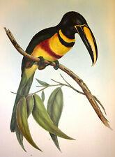 John Gould Native Birds prints parrot painting pecans Vintage Old Australia