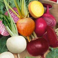 100Pcs Beetroot Vegetable Seeds Rare 6 Kind Color Organic Kitchen-Garden