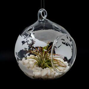 World Map Terrarium - Glass Globe for Succulents & Air Plants - Hanging Planter