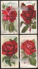 Roses -Lot Of 4 Original Red Varieties Blooming 90+ Y/O Ad Trade Cards 2