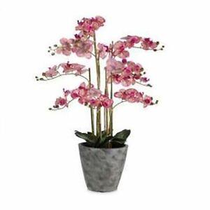 ABELLA Flora prachtvolle Orchidee  Höhe ca. 104cm