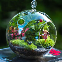 1~6pcs Hanging Glass Sphere Ball Candle Tea Light Holder Plant Vase Clear Decor