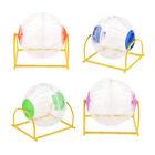 Hamster Übungslauf, der Ball spielt, transparenter Ball mit farbigem Ende