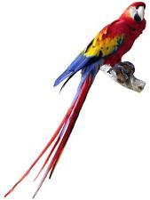 Pegatina adesivi adhesivo sticker coccion autoadhesiva habitacion papagayo