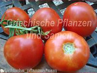 🔥 🍅 Thessaloniki griechische Fleisch Tomate 10 Samen Fleisch-Tomaten